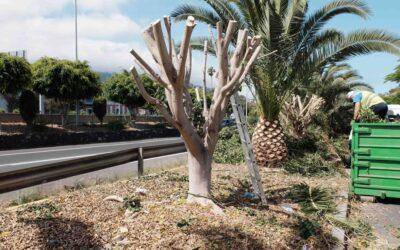 La Junta de Gobierno local aprueba el pliego de contratación del servicio de jardinería