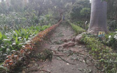 El Jardín de Aclimatación de la Orotava permanecerá cerrado una semana debido a los destrozos provocados por el fuerte viento